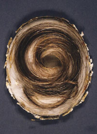 Beethoven's hair; with thanks to Lavni and Lucy for their research