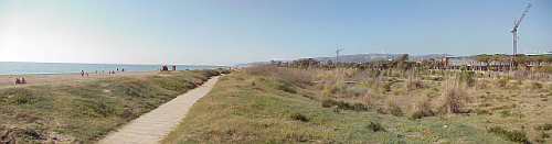 Managed dune ecosystem at the Gava coastal