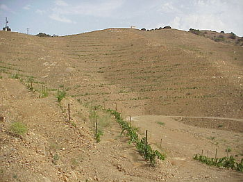 Terraces and drainage channels should avoid concave areas where sediments accumulate and there is a high risk of erosion. Terraces should not be constructed on the summit line.