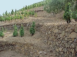 Vineyards on the steep mountain slopes